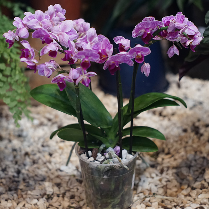 Orchid-Gro+